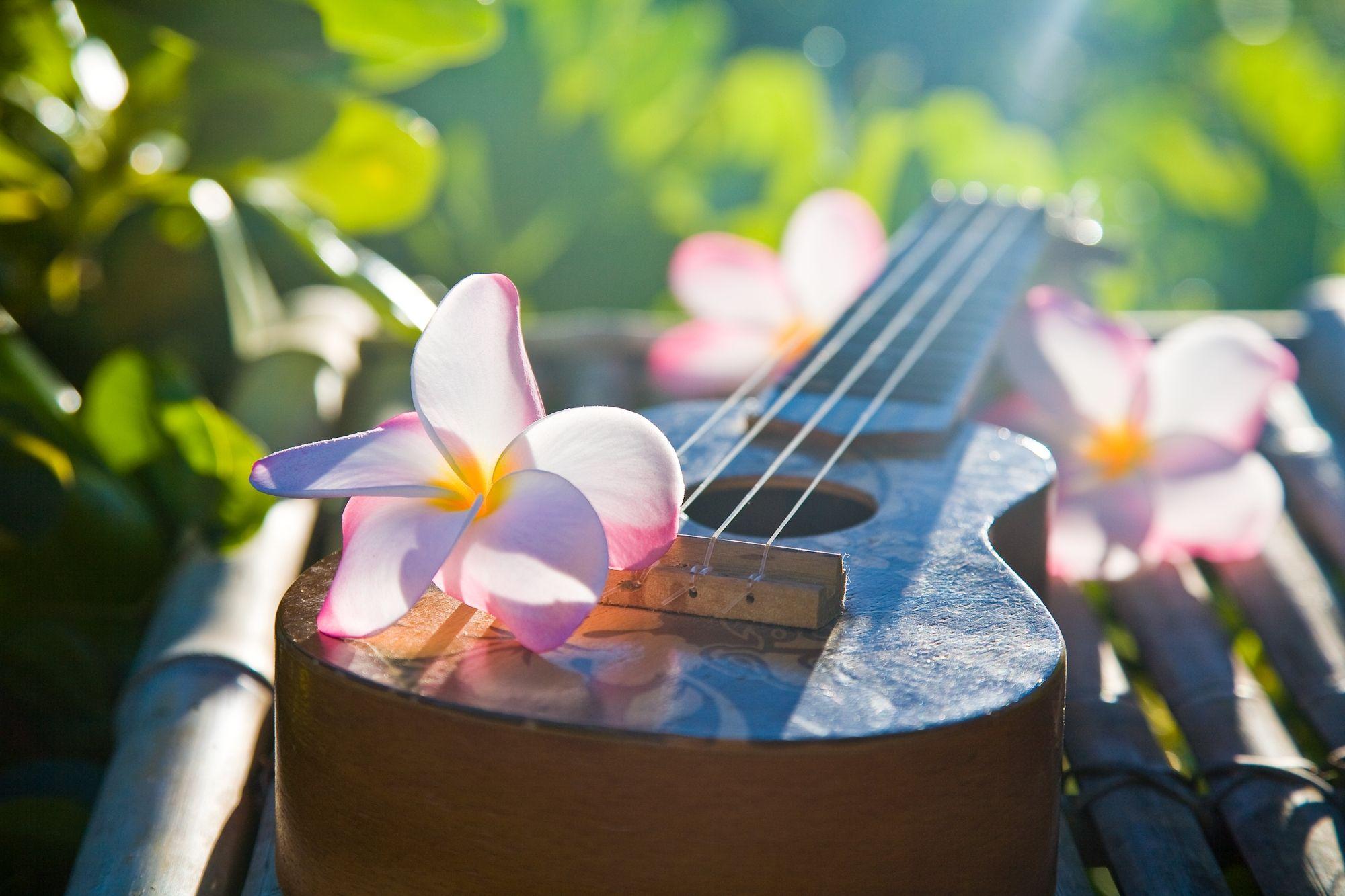 Ukulele für Hula Musik