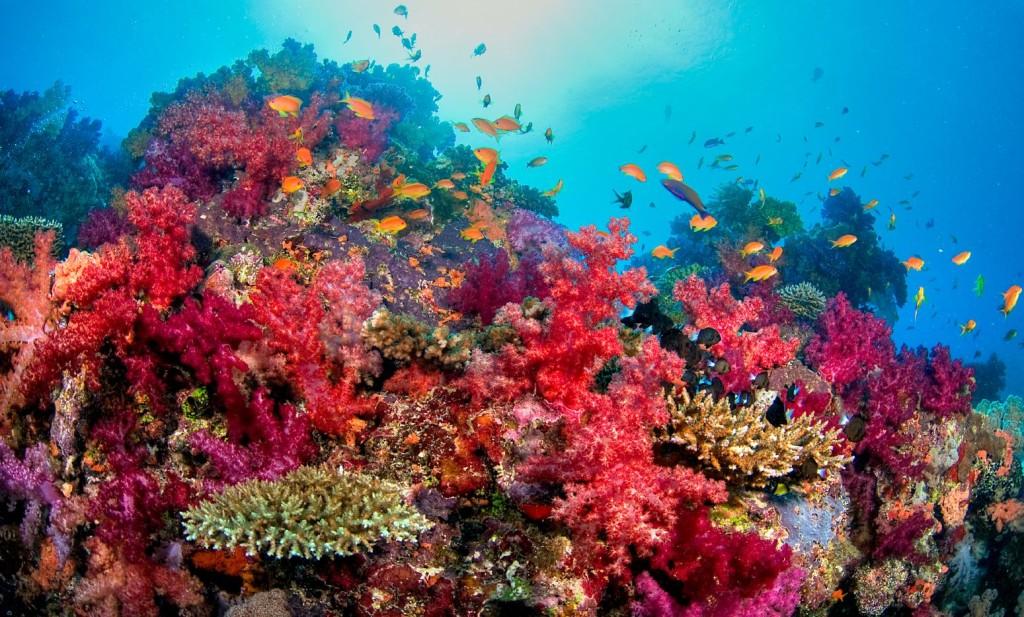 Taveuni unter Wasser