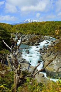 Tongariro_Mahuia_River