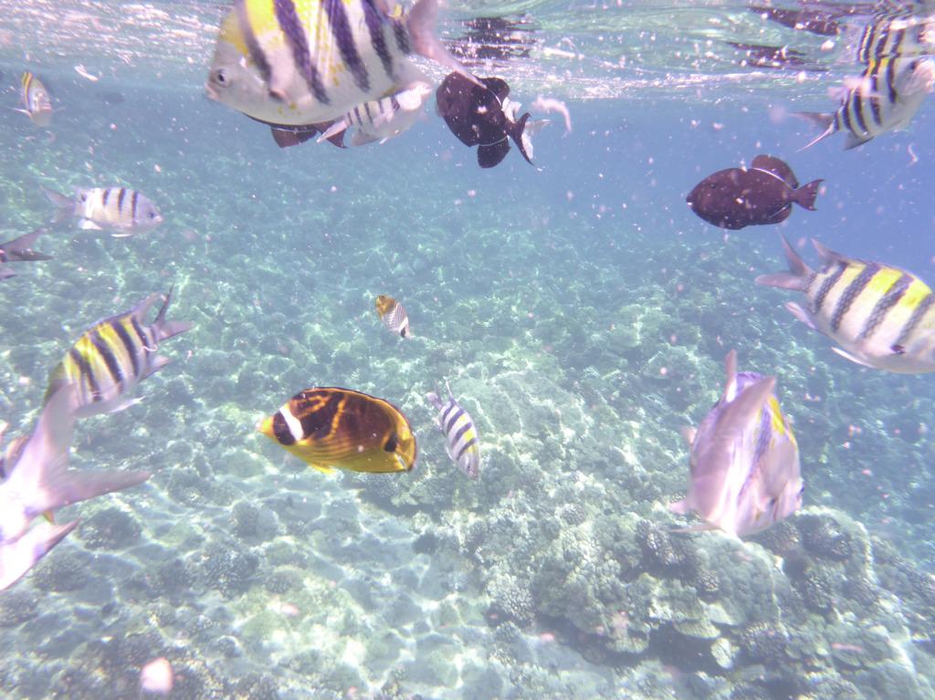 schnorchel_trip_unterwasser