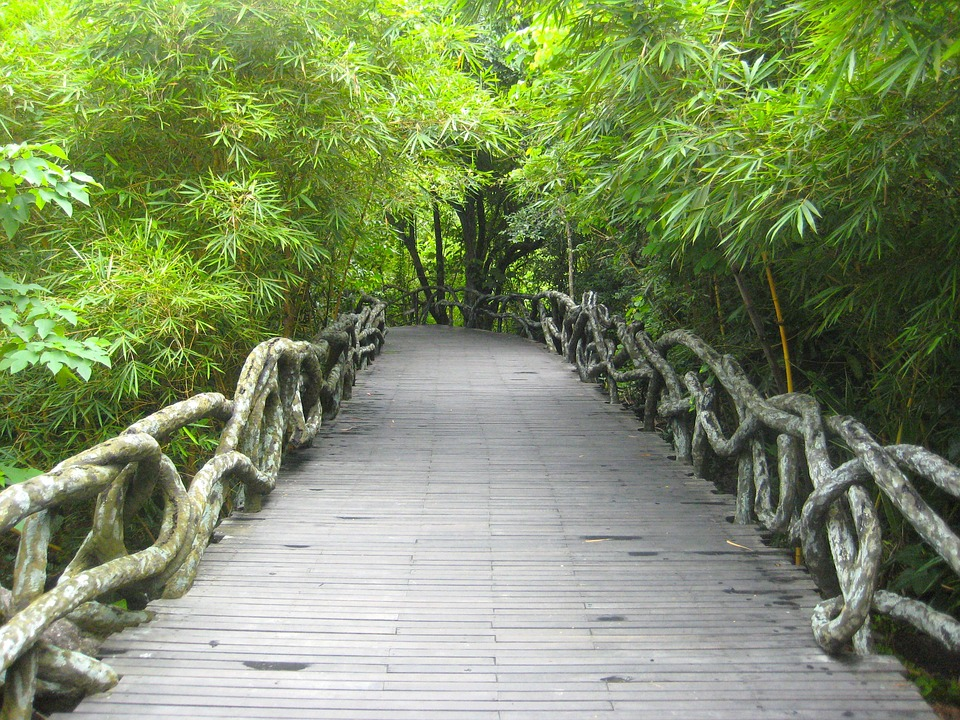 Yanoda-Rainforest