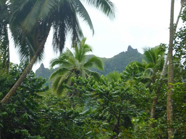 Im Regenwald von Nuku Hiva