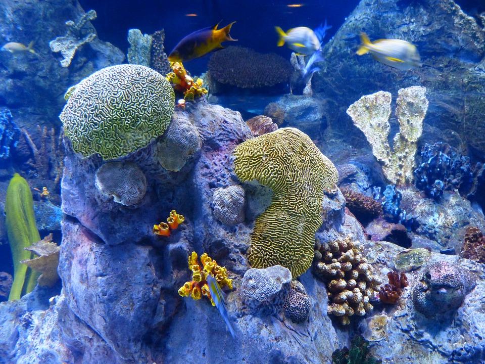 Das Ningaloo Riff - ein bedrohtes Ökosystem.