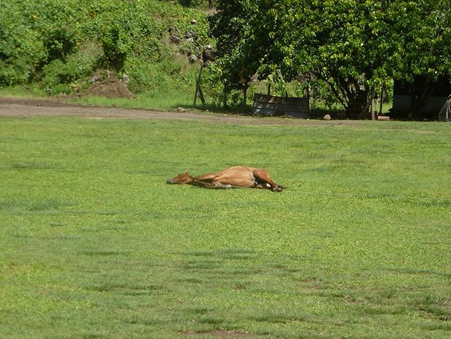 Siesta auf dem Fußballplatz oder Pferde sind doch auch nur Menschen