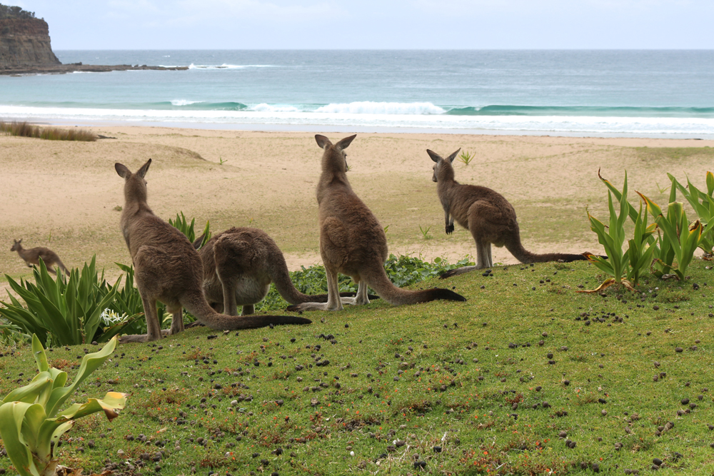 Reisebericht: Australien Oktober 2017 | Pacific Travel House Blog