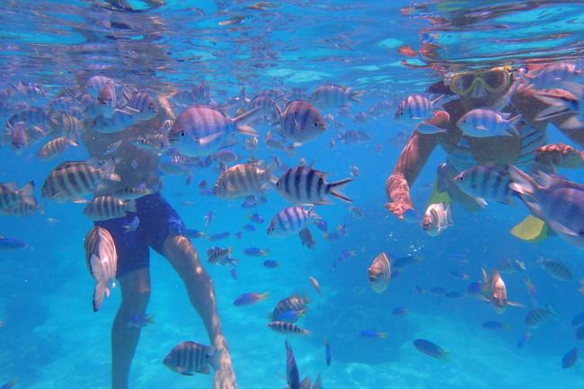 Schnorcheln Bora Bora