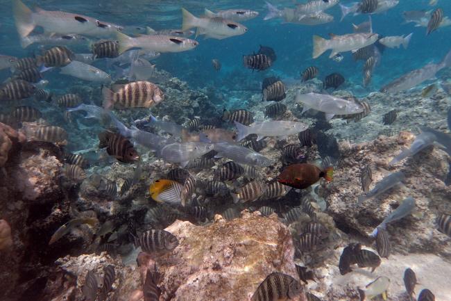 Fische in der Südsee