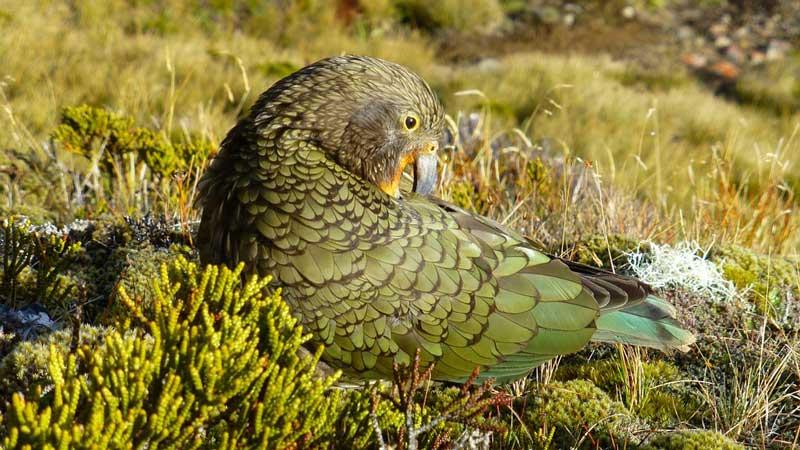 Hautnah Dran In Neuseeland 15 Tiere Die Man Sonst Nur Im Zoo Sieht Pacific Travel House Blog