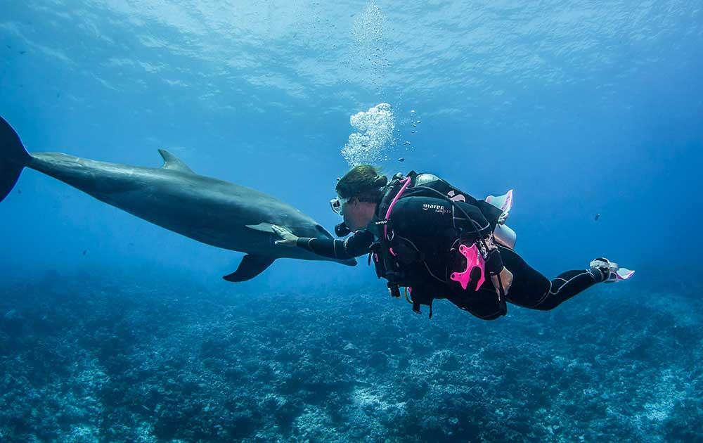 Ein Delfin am Tiputa Pass