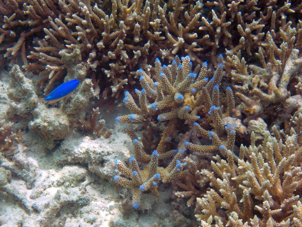 Schnorcheln in Fiji