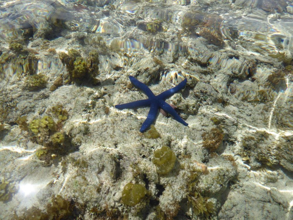 Seestern in der Südsee