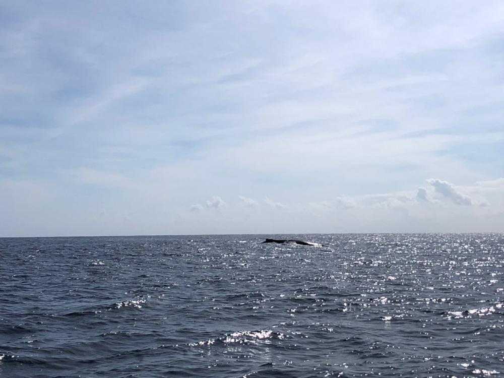 Tauchgang auf Montague Island