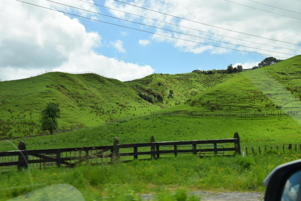 Im Mietwagen durch Neuseeland