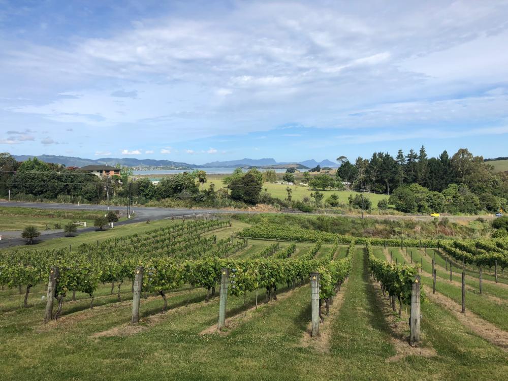 Weinbau in Neuseeland