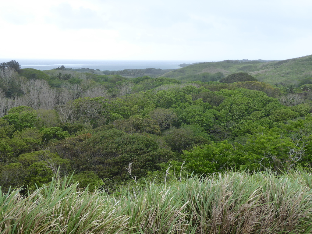 Die Südsee für Ornithologen Reisebericht