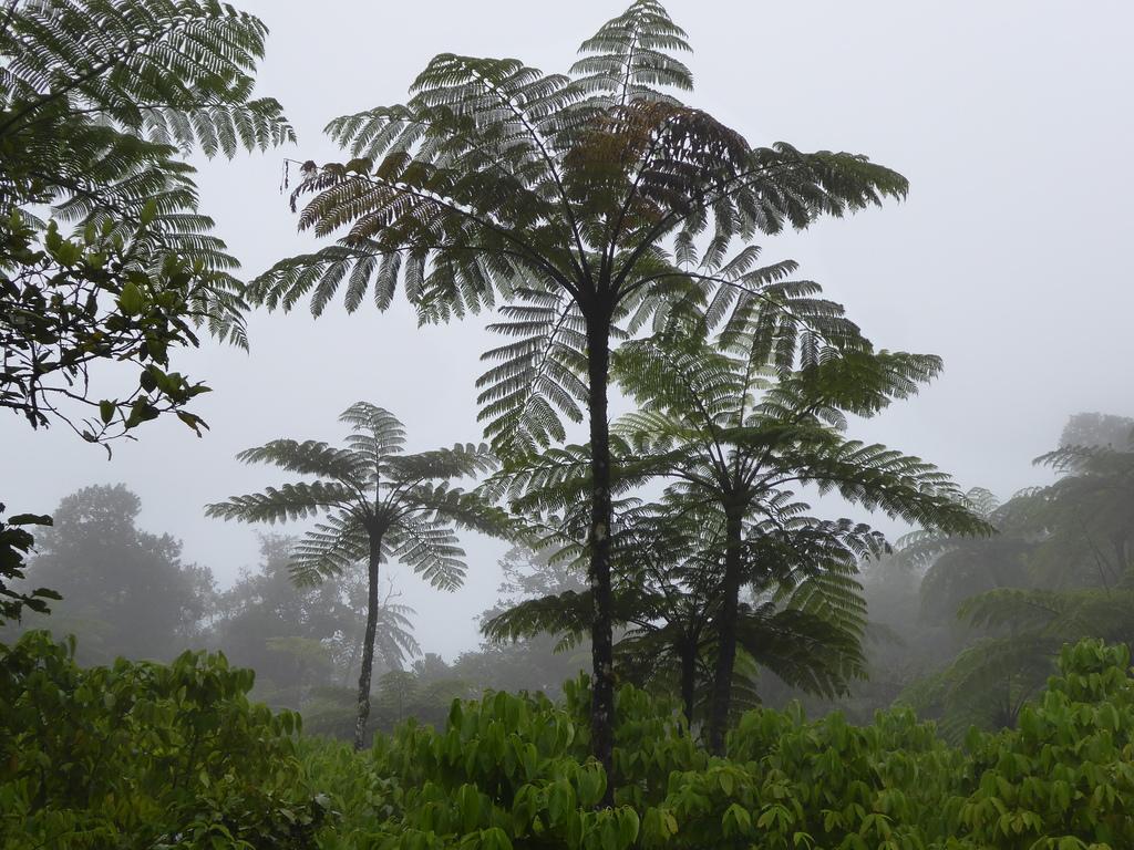 Flechtenreiche Bergwälder in Fidschi