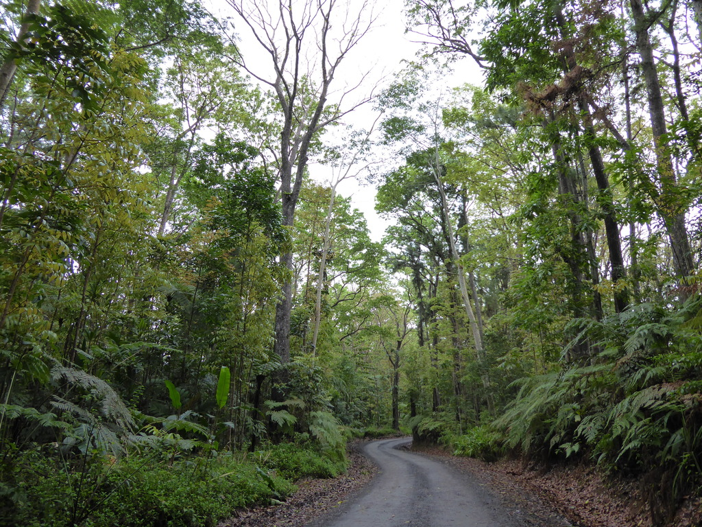Colo y Suva Forest Road