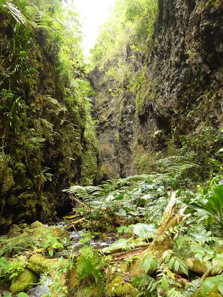 Kolonien der Tahitisalangane