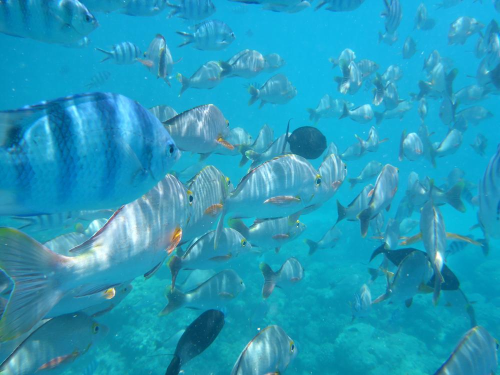 Schwimmen mit Fischen in Rangiroa