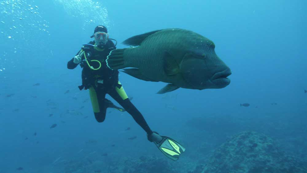 Taucher mit großem Fisch in Palau