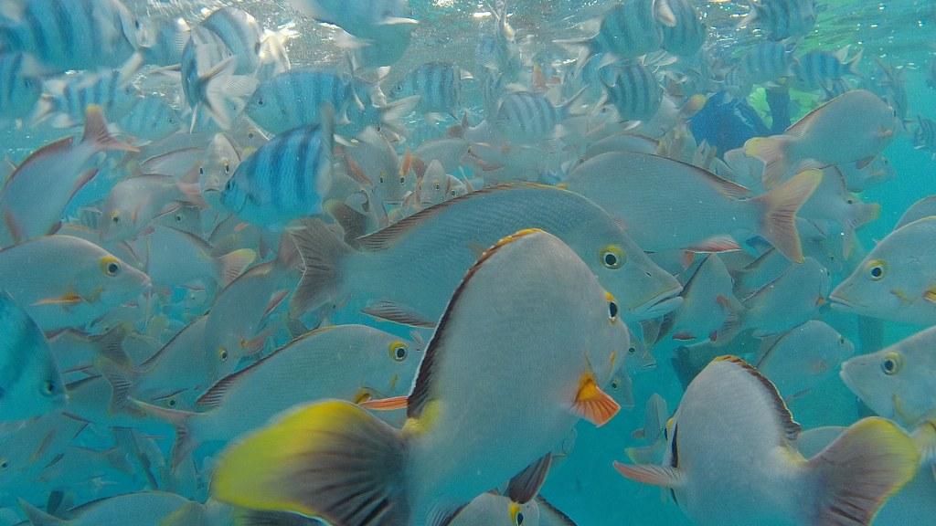Unterwasserwelt am Tiputa Pass