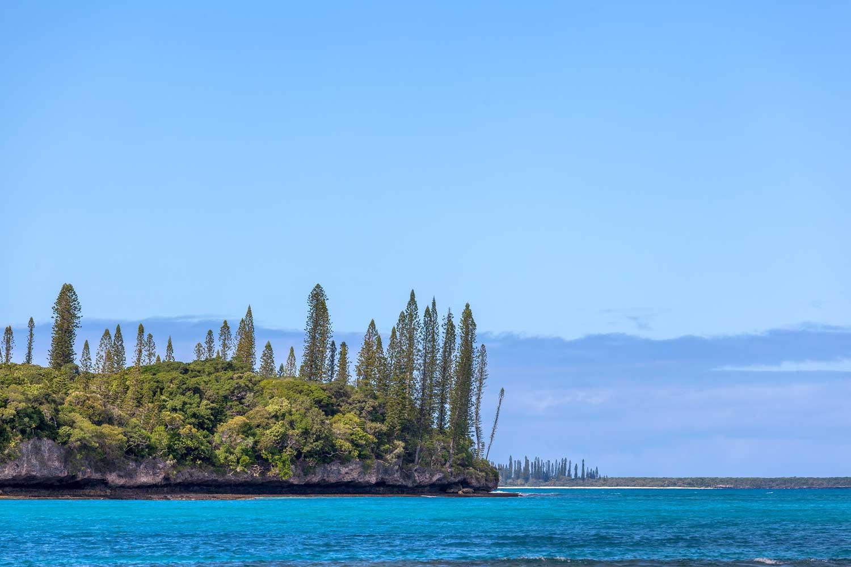 Kanumera Bay: Typische Araukarien-Landschaft