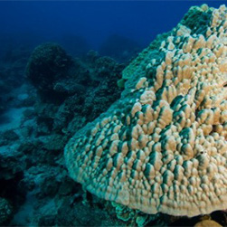 Tauchen auf den Cook Inseln Übersicht