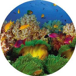 Tauchen auf den Fiji Inseln Übersicht