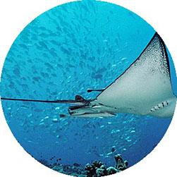 Tauchen in Mikronesien Übersicht